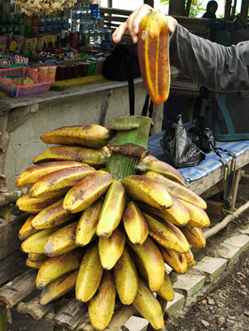 Ranggap, raja pisang dari Galunggung
