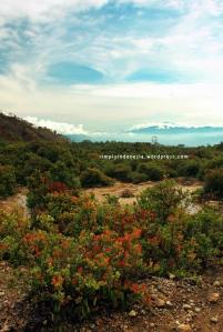 Gunung Papandayan 02