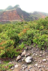 Gunung Papandayan 06