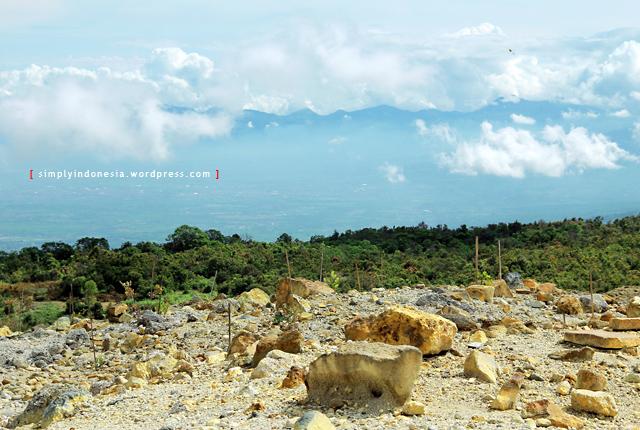 Area Penghijauan Batang Batang Bambu Yang Ditanam Oleh Para