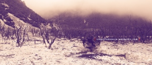 Gunung Papandayan 38