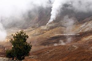 Gunung Papandayan 50