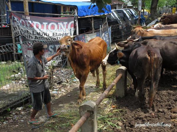 Sapi Pasar Bekonang