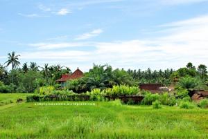 Pemandangan Desa Bangkiang Sidem, Ubud 2