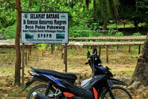 Kawasan Konservasi Mangrove Desa Pulau Pahawang 1