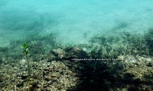 Mangrove introvert lain