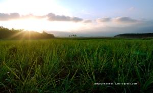 Pemandangan alam desa 1