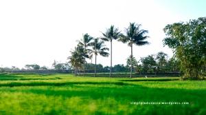 Pemandangan alam desa 2