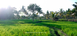 Pemandangan alam desa 3