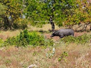 Satwa Taman Nasional Baluran