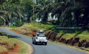 Area perkebunan kelapa sawit Cikidang