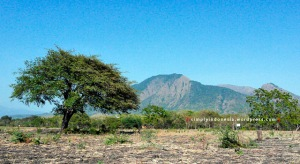 Background Gunung Baluran