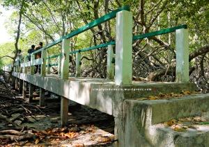 Jembatan Mangrove Trail Baluran