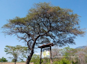 (Peta) The Ecology of Bekol's Savanna