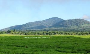 Bentang pemandangan di sekitar Perkebunan Teh Kayu Aro 1