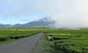 Bentang pemandangan di sekitar Perkebunan Teh Kayu Aro 2
