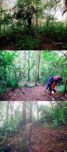 Kondisi trek pendakian Ciremai via Jalur Apuy 1