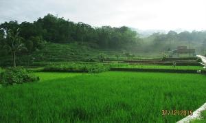 Pemandangan alam menuju Basecamp Apuy 1